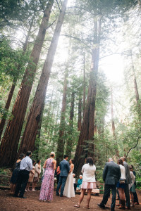 Muir Woods Wedding Photographer